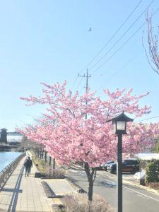【たかまい】春ですね