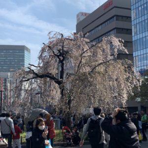 【田代舞】春ですねえ