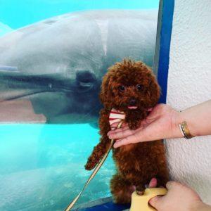 <あいりん>ペットと一緒に水族館