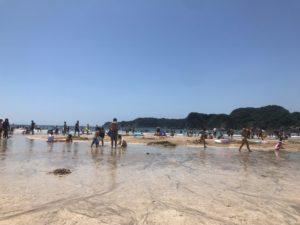 夏です!【ハラちゃん】