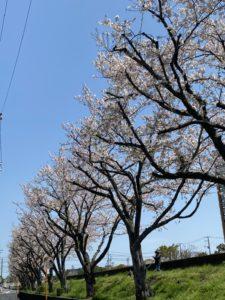 【ザッキー】春よ♫